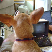 cooper-the-minitel-dog.jpg